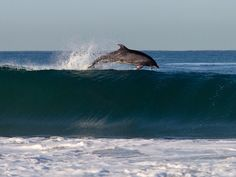 Even the dolphins couldn't resist coming out to play