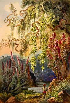 http://brewminate.com/wp-content/uploads/2017/09/091217-37-Ernst-Haeckel.jpg