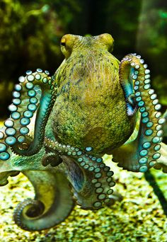 The Ocean Is Wonderful - Fascinating and vibrant green octopus