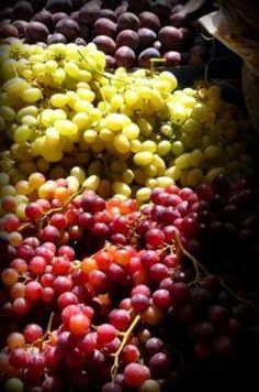 Growing Grapes - How to Grow Large & Juicy Grapes Year After Year - Modern Design Aquaponics Plants, Aquaponics System, Fruit Trees In Containers, Grapevine Growing, Non Alcoholic Wine, Grape Trellis, Grape Plant, Berry Plants, San Francisco
