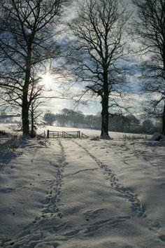 Winter Pasture More