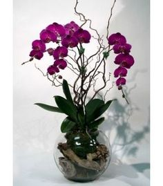 Magnificent arrangement with multiple phalaenopsis orchids in full blooming stylised with seasonal branches. Orchid Flower Arrangements, Orchid Centerpieces, Orchid Pot, Orchid Plants, Fake Flowers, Amazing Flowers, Ikebana, Artificial Orchids, Decoration Plante