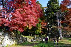 Takatori Castle ruins (Nara Pref.) in November 2013. Extremely beautiful!