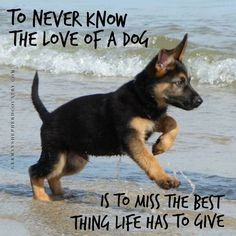 Wicked Training Your German Shepherd Dog Ideas. Mind Blowing Training Your German Shepherd Dog Ideas. Dog Quotes, Animal Quotes, Cute Puppies, Cute Dogs, Corgi Puppies, Positive Dog Training, German Shepherd Puppies, German Shepherds, Dog Behavior