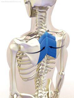 Rauten Stabilisierung der Schulterblätter.
