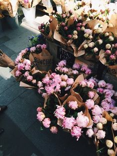 flowers, pink, and rose resmi