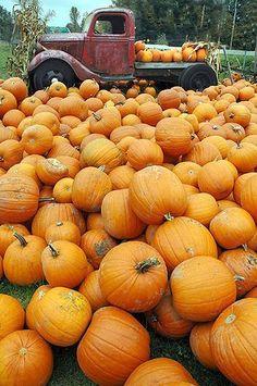 You Glad It's Pumpkin Season? Orange You Glad It's Pumpkin Season? – Everyday LivingOrange You Glad It's Pumpkin Season? Image Deco, Pumpkin Farm, Pumpkin Spice, Pumpkin Field, Autumn Aesthetic, Orange Aesthetic, Mabon, Happy Fall Y'all, Autumn Day