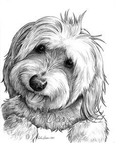 Artist In Milton Ontario - A Drawing a Day!