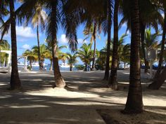 A beautiful, sunny day under the trees at Dreams Palm Beach Punta Cana is the perfect way to enjoy your Dreams getaway! Thanks to fan Sue A for this photo!