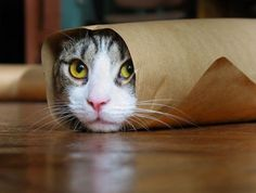 suddenly a paper towel roll, Cat