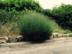 #lavender #provence #streetlavender #saintjeannetvillage #france