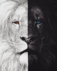 WHICH SIDE ARE YOU? COMMENT LIGHT or DARK Choose wisely and quickly because well shoutout some of the first commenters You have created a masterpiece keep inspiring us with your stunning content Art by Lion Images, Lion Pictures, Tier Wallpaper, Animal Wallpaper, Tattoo Pantera, Animals Beautiful, Cute Animals, Wild Animals, Baby Animals