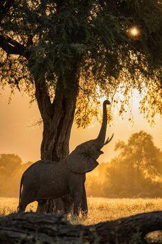 Zambezi Land of Giants - null