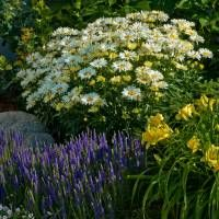 Proven Winners   Keeping the Garden in Balance