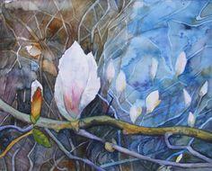 Fotos und Aquarelle von der Magnolienblüte | Die ersten Blüten der Magnolie (c) Aquarell von Frank Koebsch