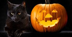 size: Photographic Print: Halloween Pumpkin and Black Cat Scary Spooky and Creepy Horror Holiday Superstition Evil Animal And by kikkerdirk : Halloween Wishes, Halloween Quotes, 31 Days Of Halloween, Halloween 2014, Halloween Cat, Halloween Pumpkins, Happy Halloween, Halloween Images, Halloween Humor