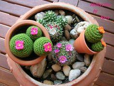 https://www.facebook.com/Hobbystica/ #amigurumi #piante #cactus #piantegrasse #le maddine #madeinitaly #uncinetto #crochet