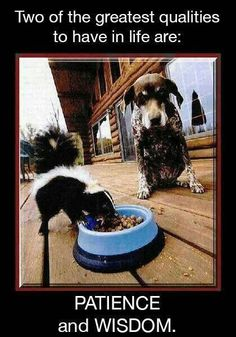 Two of the Greatest Qualities of Life are Patience & Wisdom.Dog vs a Skunk?Just leave the skunk alooone. Funny Animal Pictures, Funny Animals, Cute Animals, Animal Pics, Random Pictures, Funny Photos, Hilarious Pictures, Dog Pictures, Funny Dogs