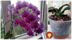 Tip od Janky, ako prebrať orchideu. Ikebana, Bonsai, Indoor Plants, Gardening Tips, House Plants, Iris, Flora, Home And Garden, Landscape