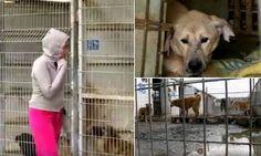 Quem já foi até um abrigo de cães em busca de um novo amigo sabe que a experiência pode ser traumática e por isso mesmo muito importante. Ao chegar àquele local repleto de peludos loucos para encontrar um lar, a vontade é de levar todo para casa. E foi isso que fez a canadenseDanielle Eden. Co-fundadora da Dog Tales Rescue and Sanctuary, ela tem visitado inúmeros abrigos de animais em todo o mundo e muitas vezes acaba resgatando animais nas condiçõesmais terríveis e levando para sua…