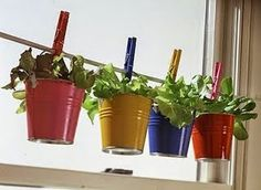 Vovó Moderninha: Horta medicinal caseira pode ser aliada no combate a diversos males