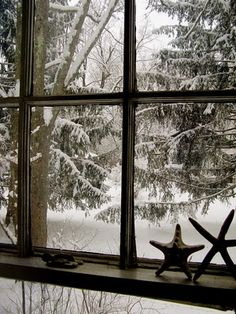 snow, I love how it looks like the star fish are looking out the window : )