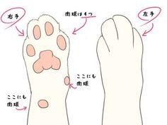 少しディープに!ネコをそれっぽく描くポイント | nanapi [ナナピ] http://nanapi.jp/2777/ ★ || CHARACTER…