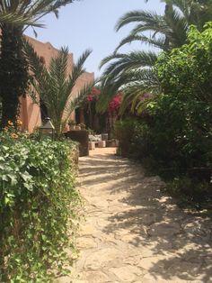 Au Jardin des douars #Essaouira #Maroc