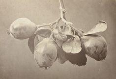 charles hippolyte aubry