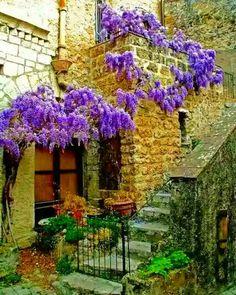 Wisteria on the stone exterior Beautiful World, Beautiful Gardens, Beautiful Places, Languedoc Roussillon, Dordogne, Wisteria Tree, Wisteria Tunnel, Pergola, Dame Nature