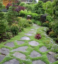 This is what I wanted in our backyard.  Even bought the irish moss