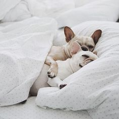 Jó reggelt!  #chill #saturday #newday #weekend #dogs #summer #sleepymood #elle #ellehungary  via ELLE HUNGARY MAGAZINE OFFICIAL INSTAGRAM - Fashion Campaigns  Haute Couture  Advertising  Editorial Photography  Magazine Cover Designs  Supermodels  Runway Models