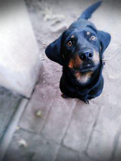 A loving pet