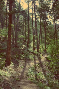 {Forest} Green forest #forest #trees ❦✿❦