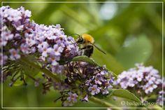 Entry for #rhsgardeningblogs from Badgertails: Homemaker, July Garden