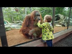 Funny Animals Kids At The Zoo New Compilation 2016 Funny Babies At The. Zoo Animals, Funny Animals, Cute Animals, Wild Animals, Funny Babies, Funny Kids, Fox Facts, 2016 Funny, Animal Kingdom
