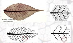 architektur diagramme interesting article on leaf forms and architecture - Biomimicry Architecture, Architecture Design Concept, Conceptual Architecture, Famous Architecture, Architecture Sketchbook, Pavilion Architecture, Landscape Architecture Model, Origami Architecture, Pavilion Design