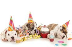 Hollywood Pet PartiesBeverly Hills Pet Photography Party Planners ...