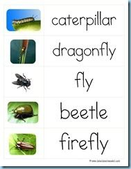 """""""Read & Write the Room"""" Insect Cards"""