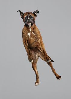 'Flying Dog' Photos Capture Furry Friends In Freefall