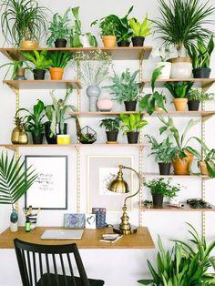plant-filled office shelves