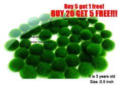 5 pcs Marimo Moss Ball-live aquarium plant decoration ornament java fish tank O