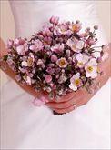 New Zealand Wax flowers, love the stems