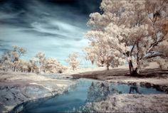 Fotografía infrarroja en el campo