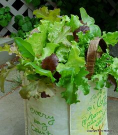 Here's a clever planting of lettuces and salad greens in an old shopping bag, where drainage holes were added at the bottom. To recreate this container, here are instructions and a video.