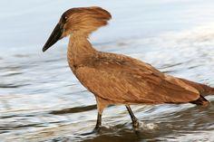 Kenya Bird Photos by B.J. Bergstrom