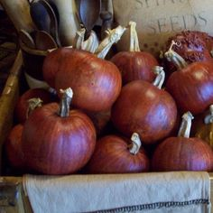 Gourdkins are grown from a seed which is a cross between a gourd & a pumpkin. The gourdkins are left in the field through winter,unlike a pumpkin which would rot. In spring they are pulled from the field & finished to produce this burnt orange treasure that will last for years to come!