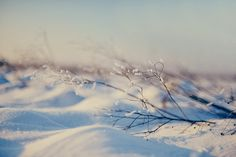 The season by *December Sun, via Flickr
