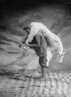 S.A. Crawford carrying a goat over his shoulder on the summit of White Pass, Sept. 3rd 1905. Photographed by Case & Draper, British Columbia.