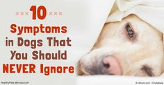 There are certain dog symptoms you should never ignore, because a wait-and-see approach is just not worth the risk.